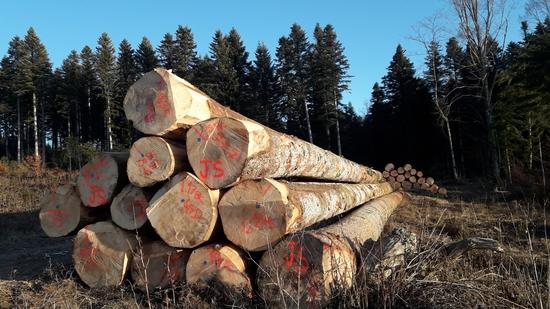Achat de bois